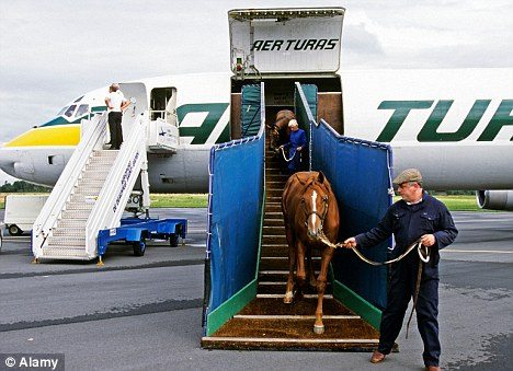 Travelling with your horse