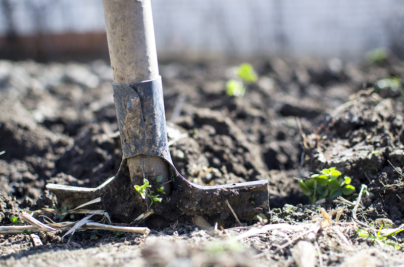 spade in allotment soil allotment insurance